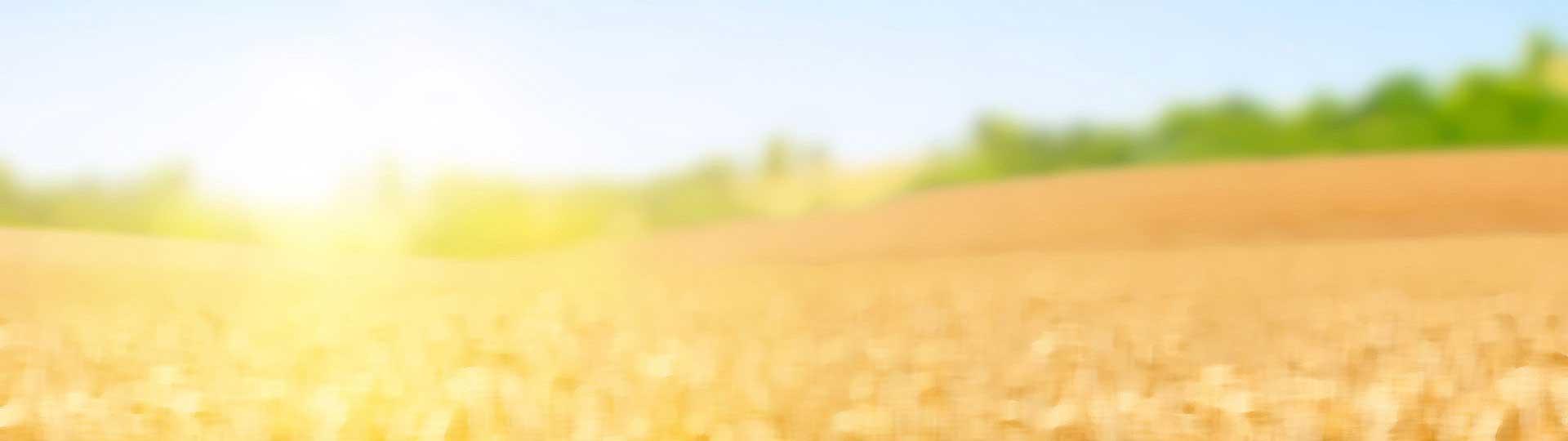 bg field